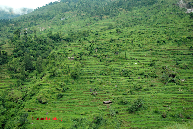 Pics of Lush green fields cut in the mountains between Kathmandu and Kodari by Arun Shanbhag