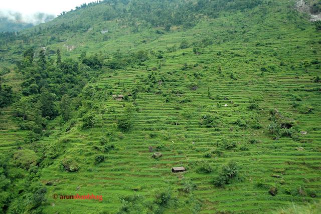 Pics of Lush green fields cut in the mountains between Kathmandu and Kodari by Arun Shanbhag