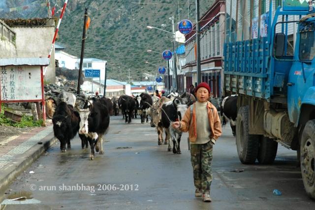 Kailash Manasarovar Yatra to Tibet, Respite in Nyalama, written and pics by Arun Shanbhag