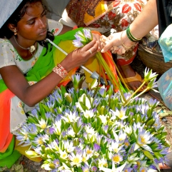 "Girl selling ""Neel Kamal"" blue lotus at the Dadar Flower Market, Mumbai by Arun Shanbhag"