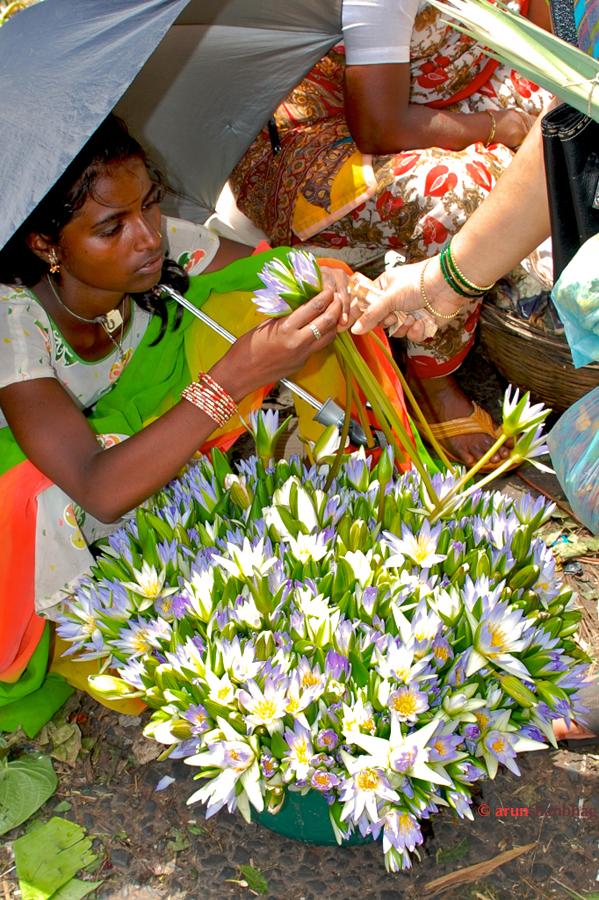 """Girl selling """"Neel Kamal"""" blue lotus at the Dadar Flower Market, Mumbai by Arun Shanbhag"""