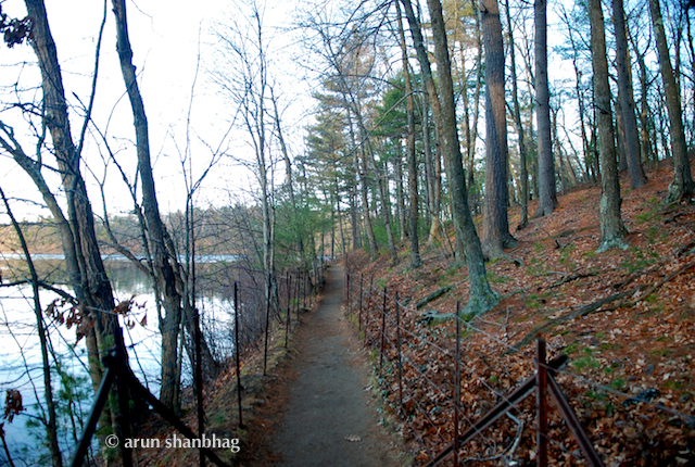 On Walden Pond Walking Trail pics by Arun Shanbhag