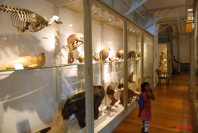 Meera visits the Harvard Museum of Natural History