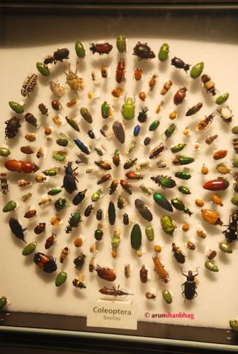 Pics from Meera visits the Harvard Museum of Natural History by Arun Shanbhag
