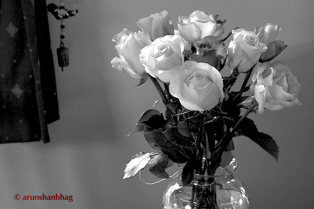 pics of colorful roses in a vase at home by Arun Shanbhag