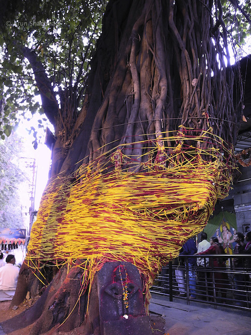 Banyan Tree at Sita Gufa cave in Panchavati, Nashik by Arun Shanbhag