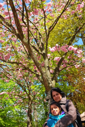 Netherlands Keukenhoff Manashi Meera Picture of Cherry Blossoms in Netherlands