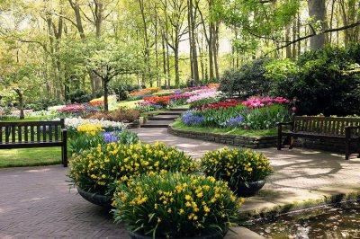 pic of tulips at Keukenhof Gardens Lisse Netherlands by Arun Shanbhag